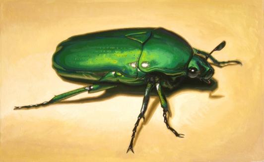 christmas-beetle_no-border